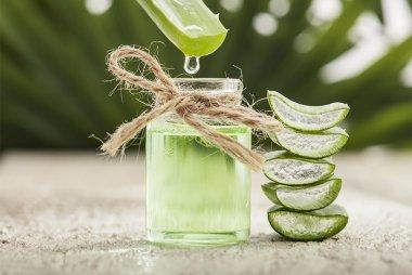 The aloe vera plant has many uses in natural medicine.