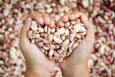 aged-garlic-heart-health